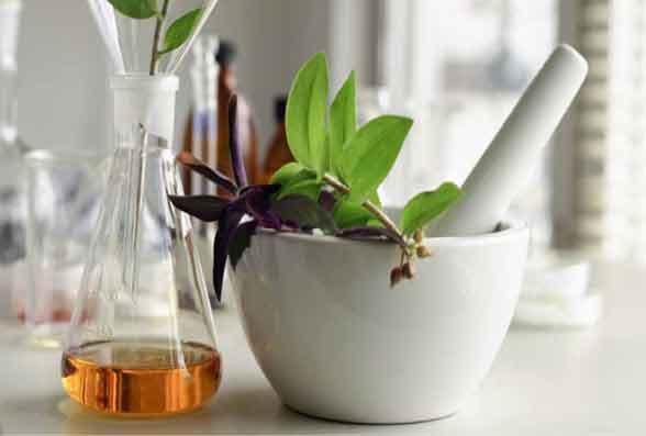 campo da ervas medicinais
