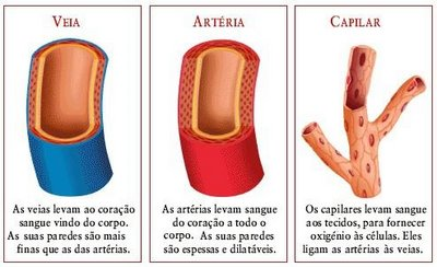 Artérias, veiase capilares