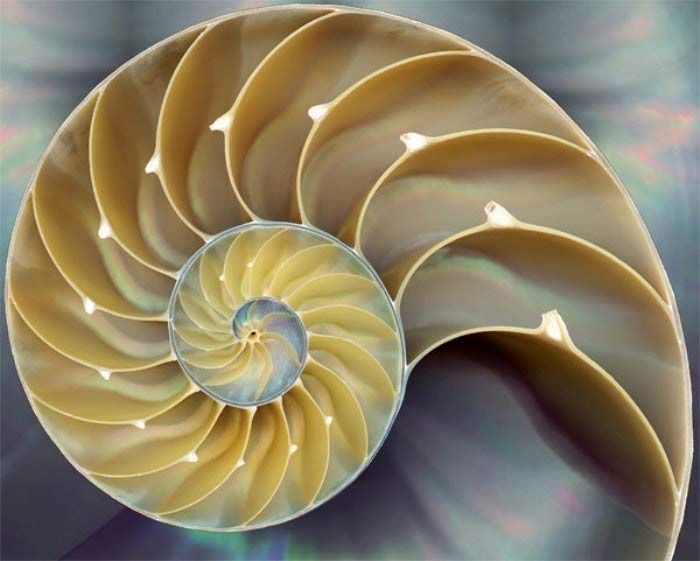 Photo of A sequência de Fibonacci na natureza