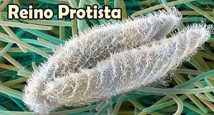 Algas e protozoários:: veja exemplos em vídeo e imagens