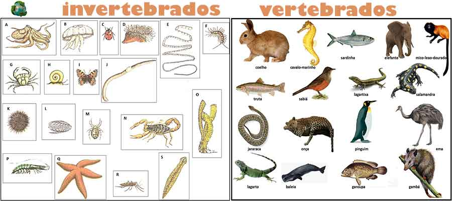 sub reino animal vertebras