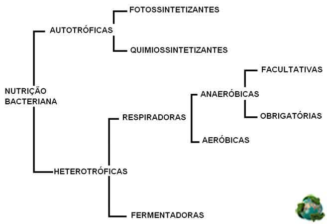 bactérias autótrofas e heterótrofas