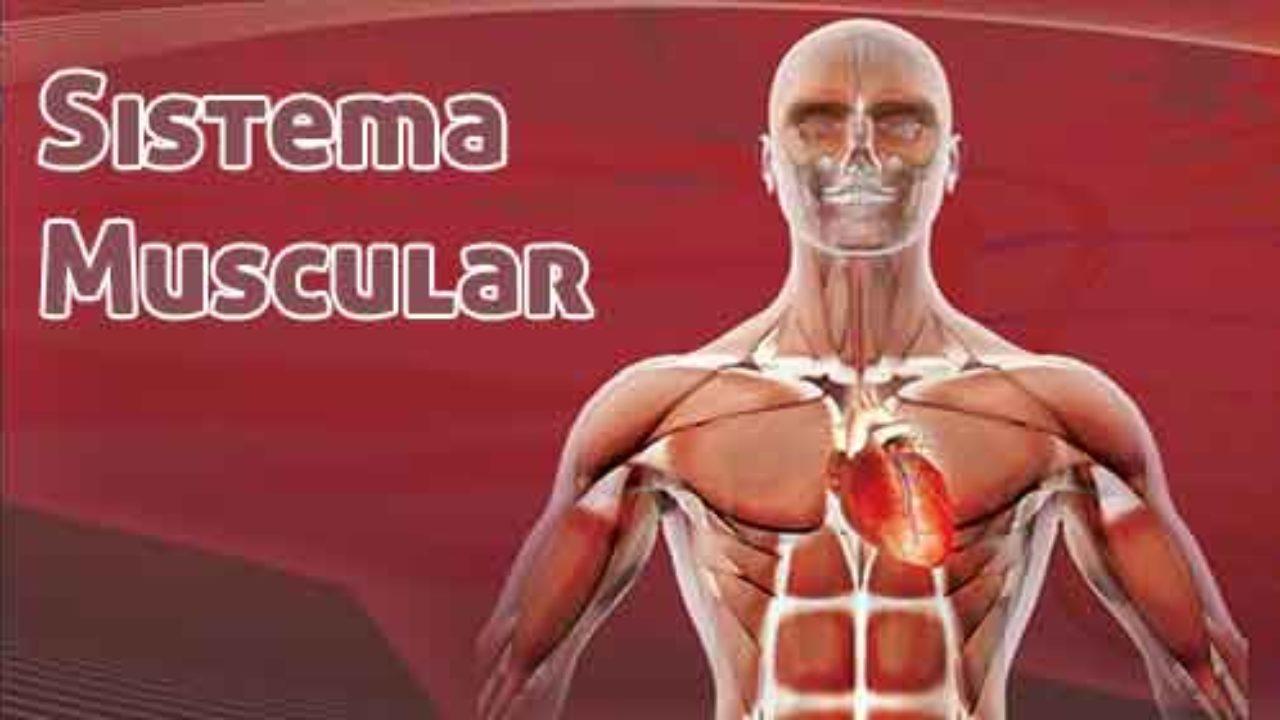 musculos órgãos dos sentidos