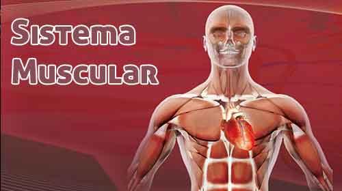 Photo of Os Principais músculos do corpo humano