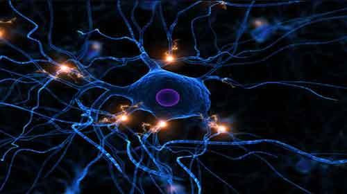 Photo of Jogo dos Neurônios