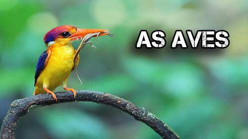 Photo of As Aves – Características, classificação e evolução