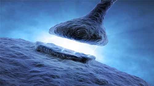 neurônios não se tocam