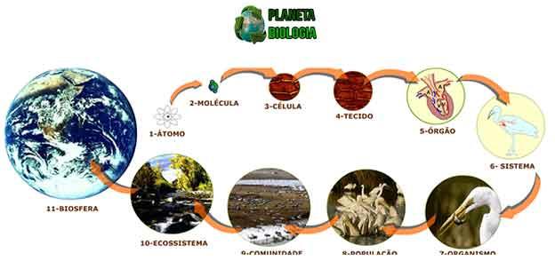 https://planetabiologia.com/o-que-e-populacao-conceito-ecologico/