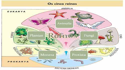 Photo of Os cinco reinos dos seres vivos – Veja aqui quais são e um breve resumo