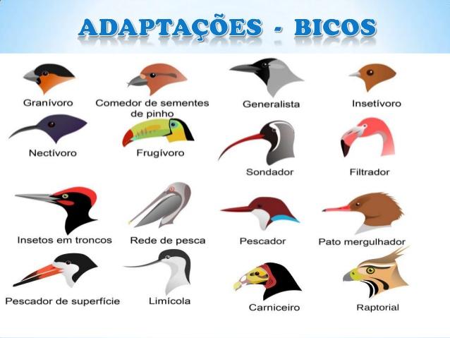 Evolução do bio das aves