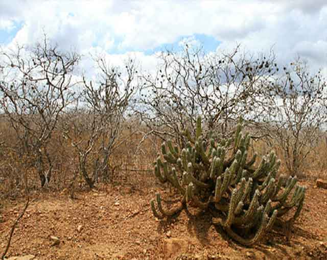 Bioma Caatinga