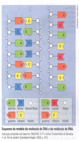 Molécula de DNA