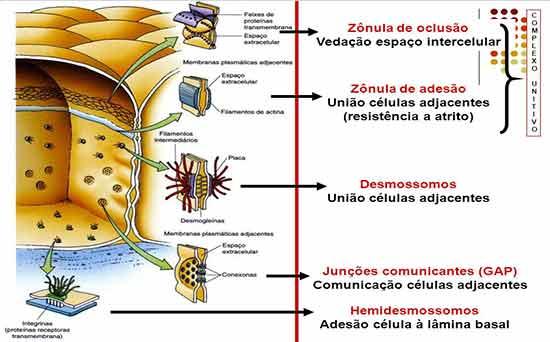 Especialização membrana