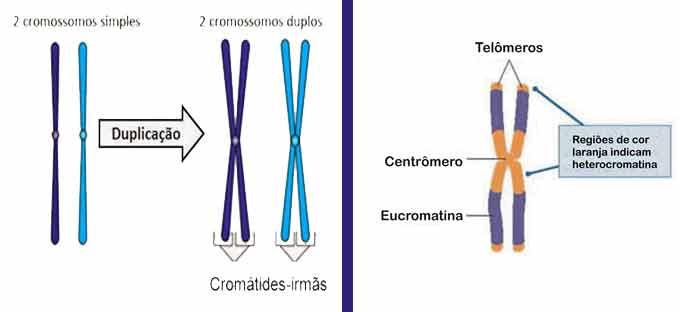 cromossosmos, cromátides, centrômero, telômero