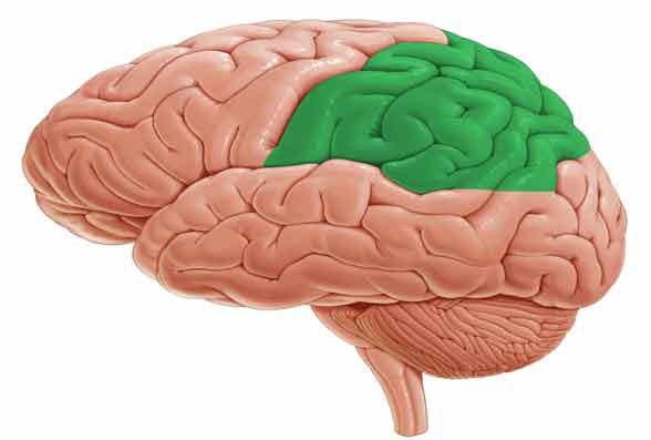 córtex parietal posterior