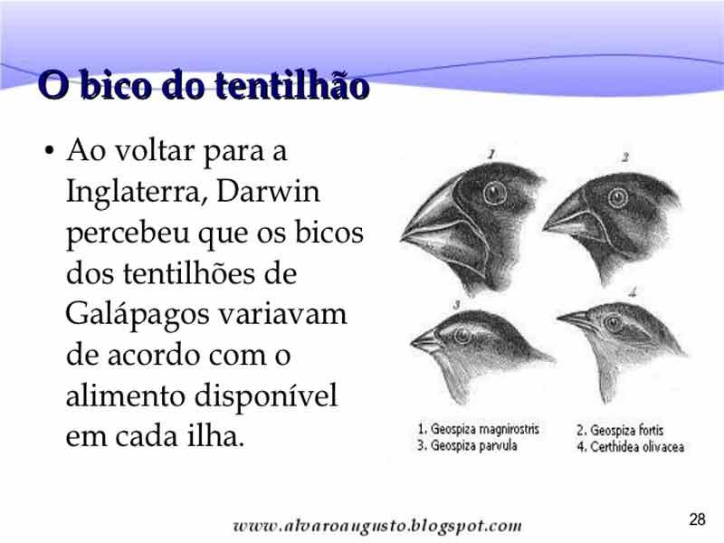 Tentilhos de galápagos