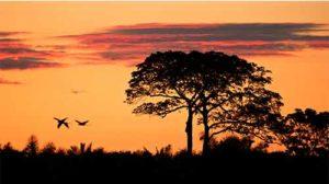 ecossistema relevo altitude clima