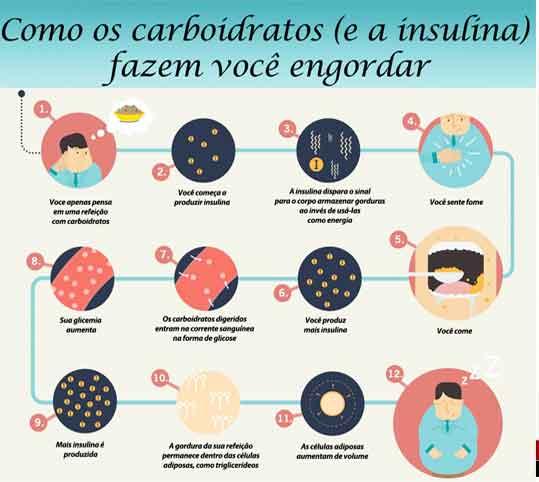 Tecido conjuntivo adiposo – características e funções