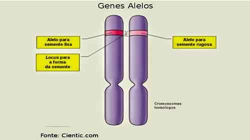 o que é genética