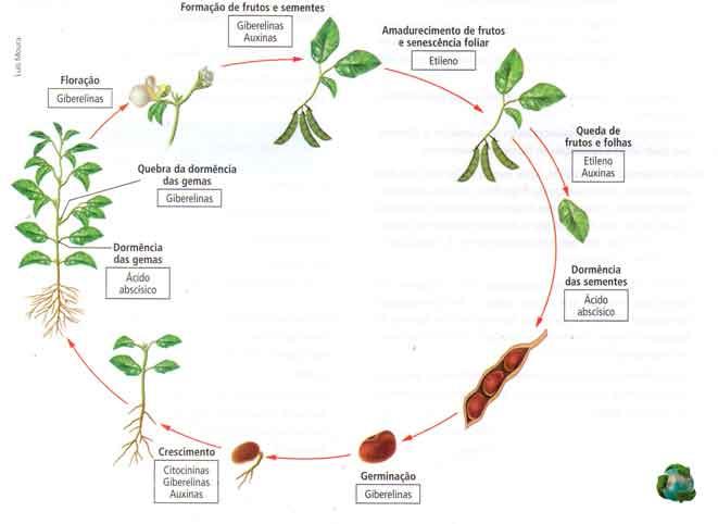 ciclo de vida vegetal