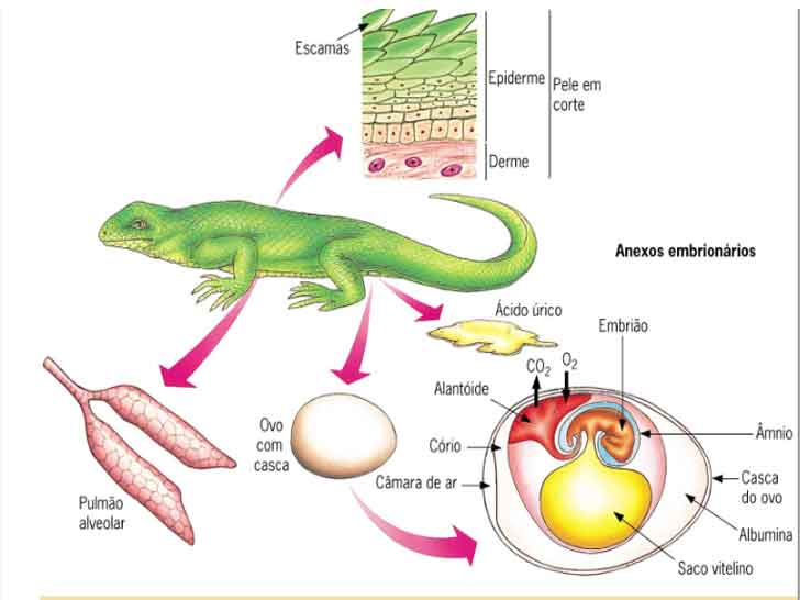 Adaptações dos répteis ao ambiente terrestre