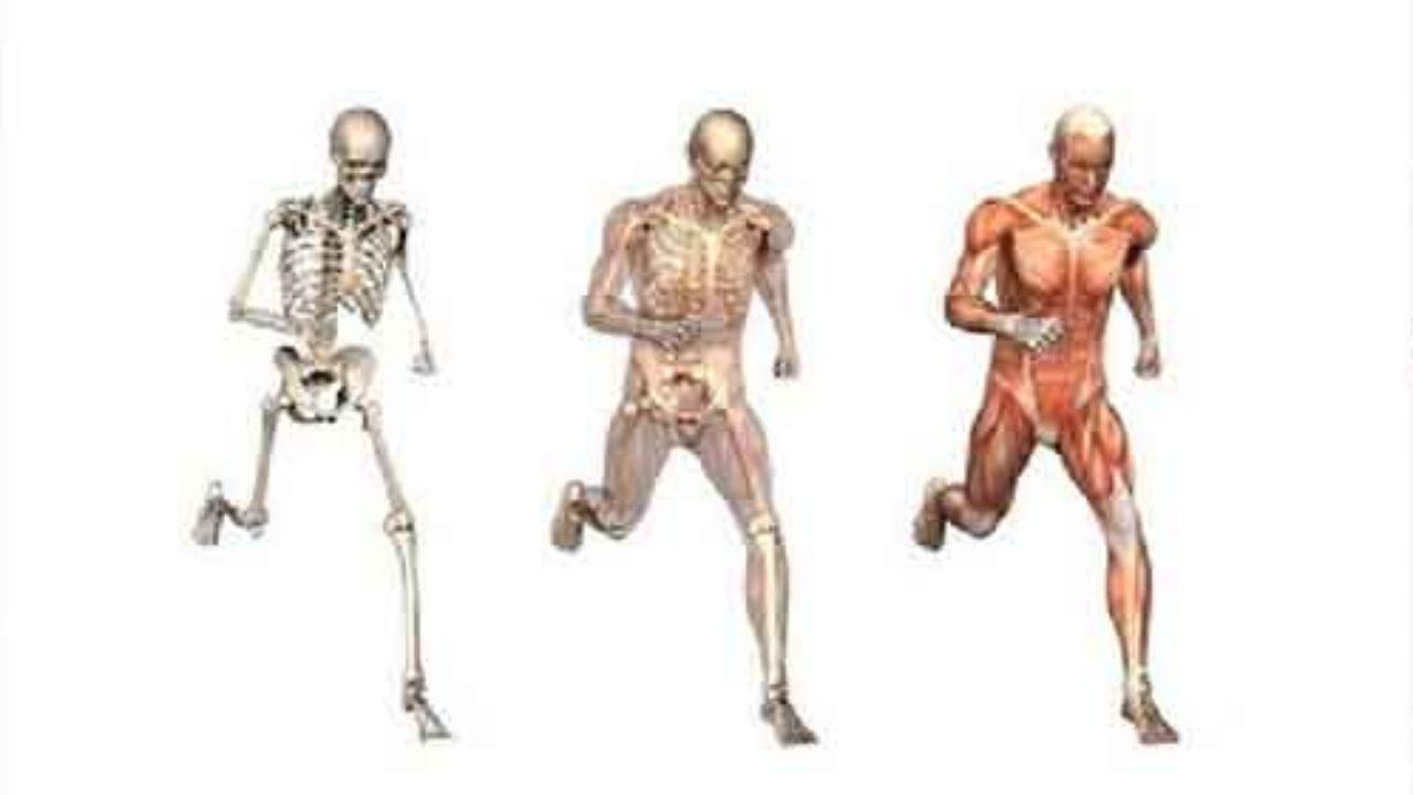 Sistema muscular perna e pé