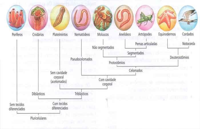 evolução dos verbrados desenvolvimento filogenético do reino animal