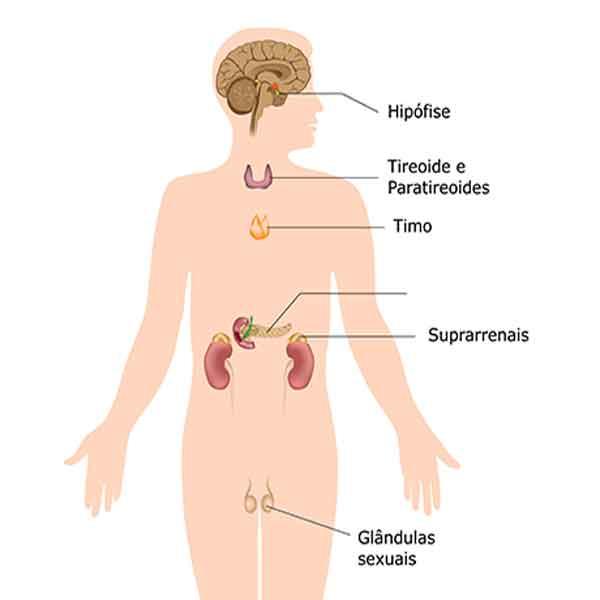 Aparelho hormonal
