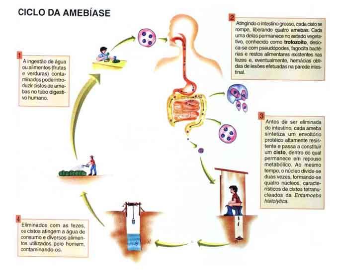 O que é Amebíase - Sintomas, tratamento, causa, transmissão, prevenção