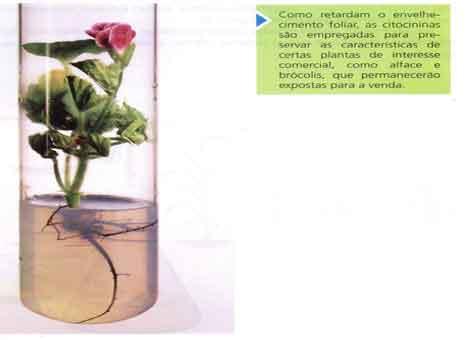 divisão celular, o crescimento foliar, a germinação, a floração e a frutificação