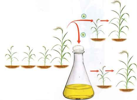 crescimento celular