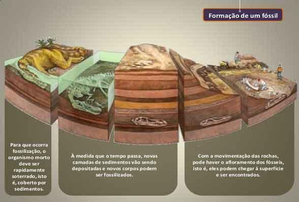 registro fóssil