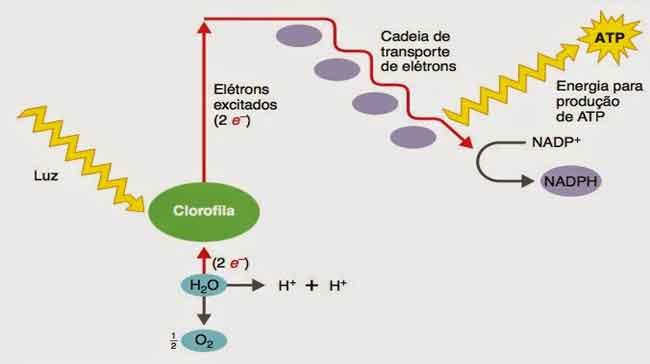 o que é clorofila