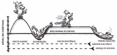 Fadiga Adrenal