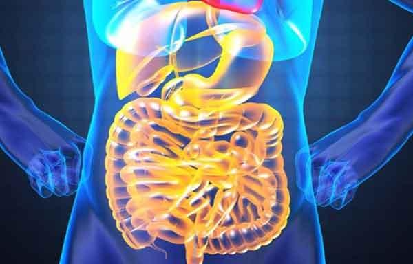 função da cavidade abdominal
