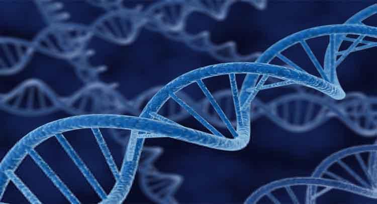 Veja as etapas da replicação do material genético passo a passo