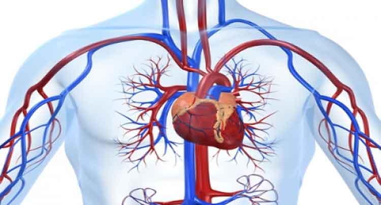 E sangue doenças do circulatório do sistema