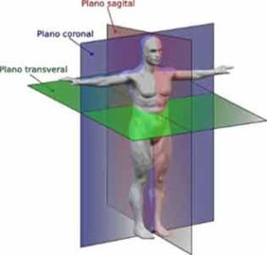 Tipos de simetria bilateral - Exemplos