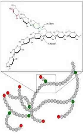 ligações α-1,6 no glicogênio