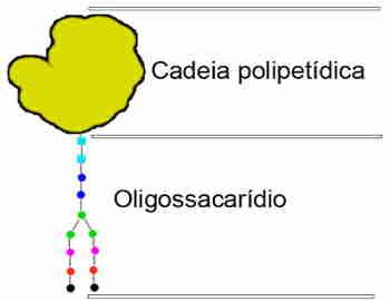 O que é glicoproteína