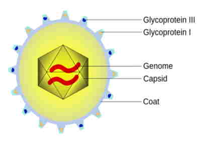O que é genoma viral