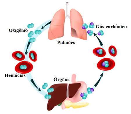 hematose pulmonar troca gasosa