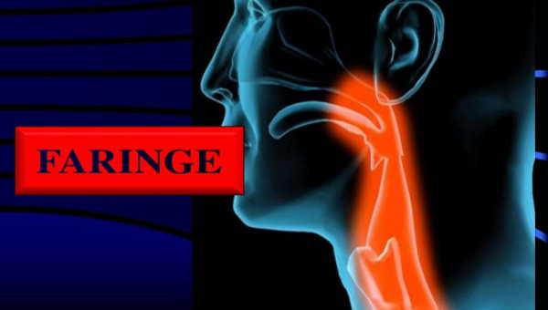 Entenda qual a função da faringe, suas estruturas e principais características